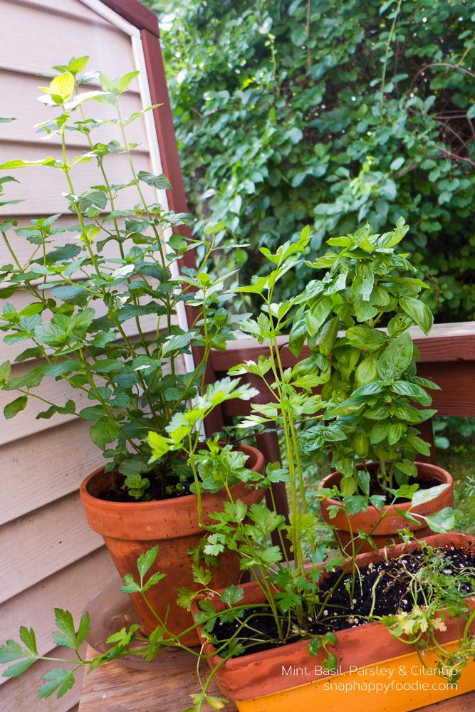 tomato-herbs-05